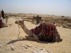 camel 300x225 Twitter Week for Journalists: DAY ONE   What & Why